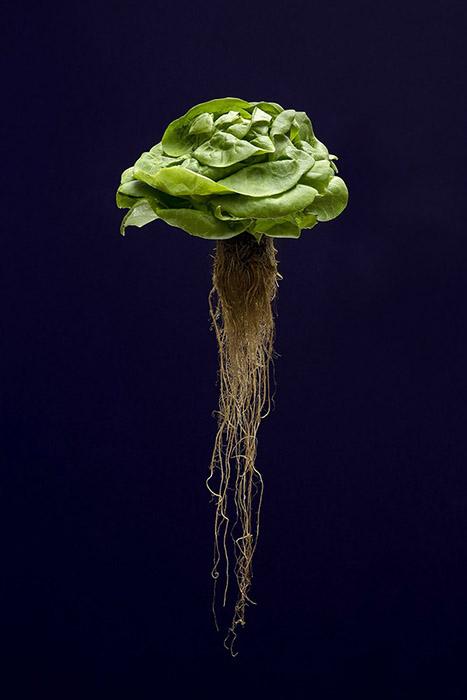 Thierry Dubois, Mutation, 2017 120 x 80 , tecnica fotografica su Dibond