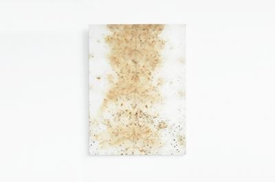 Sindone vegetale di Gaia Bellini, Stampa botanica su tela, 62x46 cm, 2019