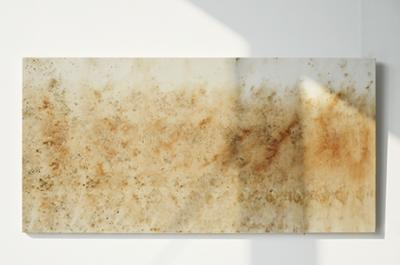 Sindone vegetale di Gaia Bellini, Stampa botanica su tela, 65x130cm, 2019