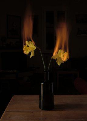 Burning daffodils, Emiliano Zanichelli, Fotografia, 30x40 cm, 2020 Serie di 7
